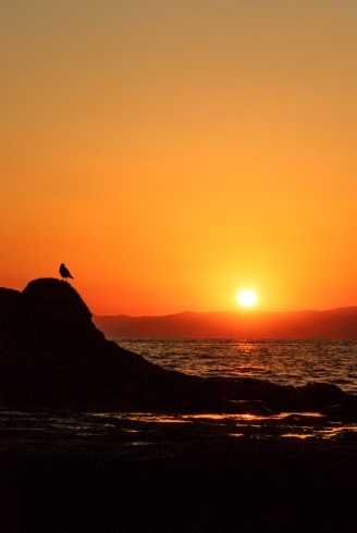 A small gull perched on a rock at sunset
